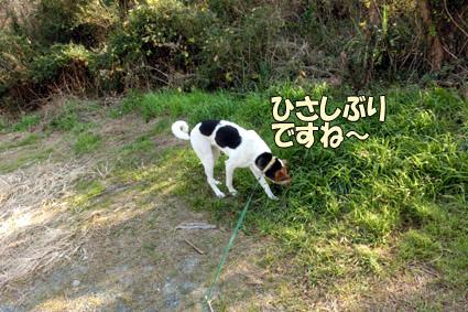 CIMG9465.jpg