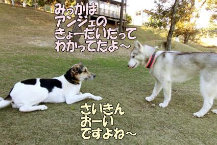 CIMG9642.jpg