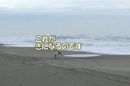 DSCF2995.jpg